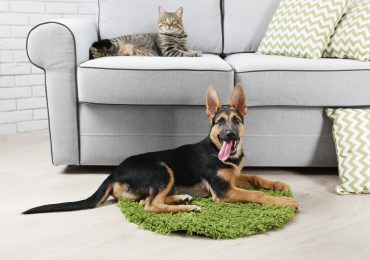 dogs cats and upholstery cleaning