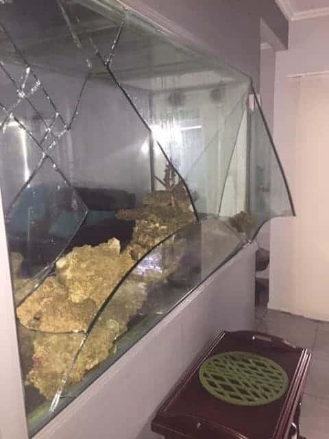 Aquarium disaster
