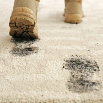 Carpet stain removal to remove everyday stains like muddy footprints