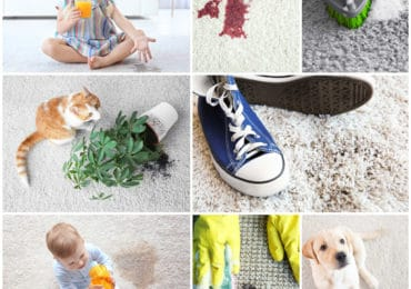 Carpet Stain Removal and Sanitising