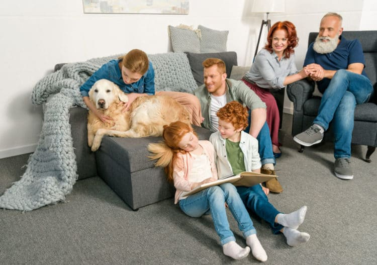 family and pets enjoying clean upholstery and clean carpets