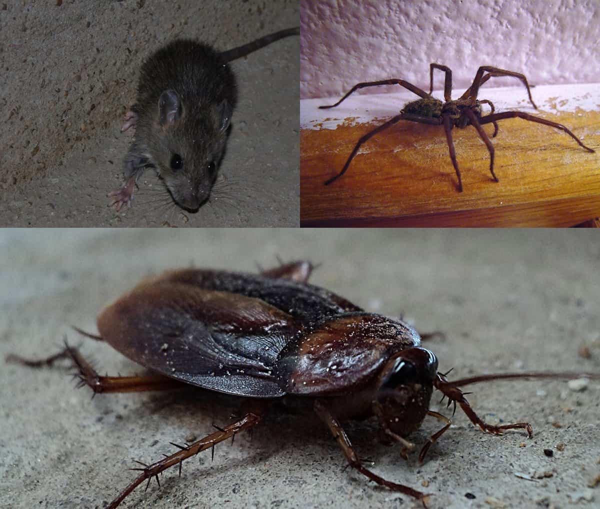 Elite Pest Control in Brisbane